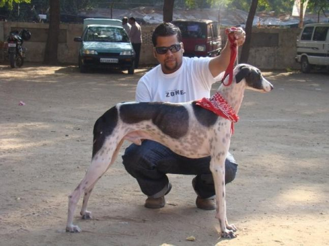 , Ahmedabad Dog Show 2010, DogSpot.in