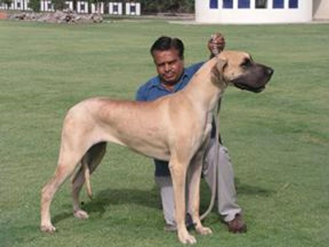 , DAM OF TWO BISS SPECIALITY WINNERS (OYESTER KENNEL), DogSpot.in