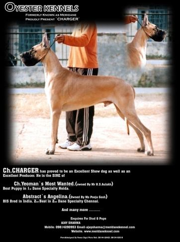 , SIRE 17 INDIAN CHAMPIONS 1 PAKISTANI CHAMPION (OYESTER KENNEL), DogSpot.in