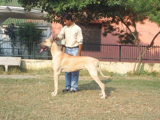 , AJAYKUMAR SHARMA (OYESTER KENNEL), DogSpot.in