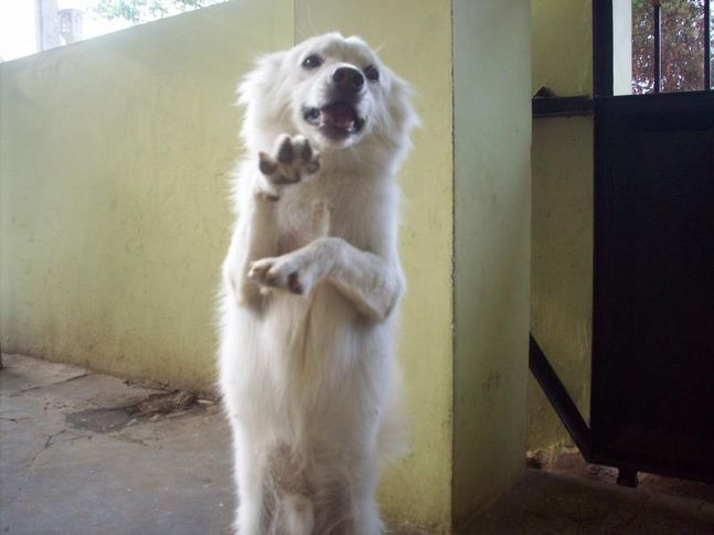 my album, my album, DogSpot.in