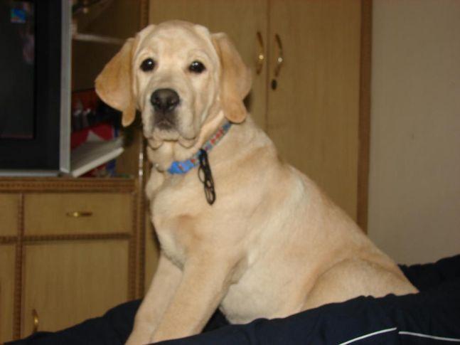 , ALLAN SMART DOG, DogSpot.in