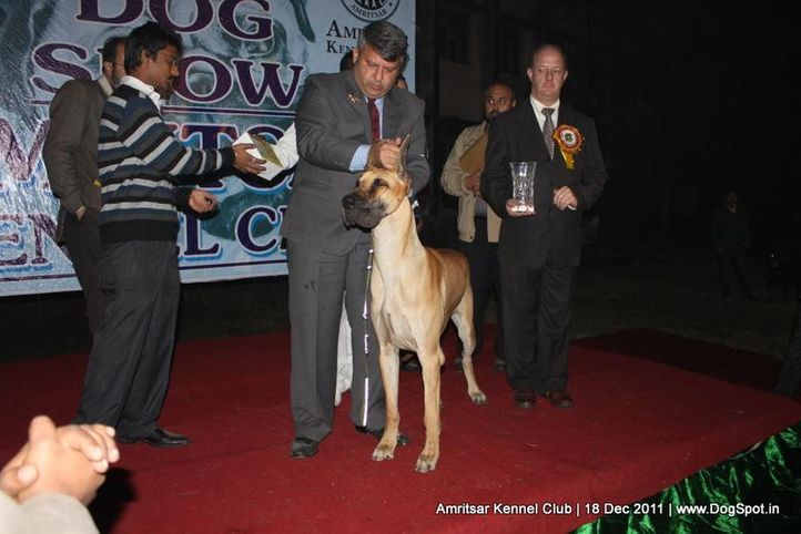 bis,sw-46,, Amritsar 2011, DogSpot.in