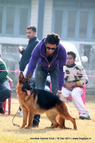 gsd,sw-46,, Amritsar 2011, DogSpot.in