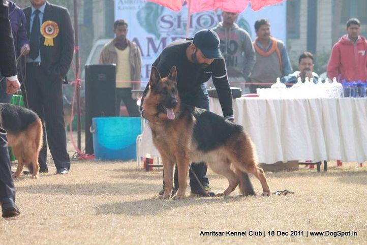 ex-270,gsd,sw-46,, ALIX VON HAUS SHERGILL, German Shepherd Dog, DogSpot.in