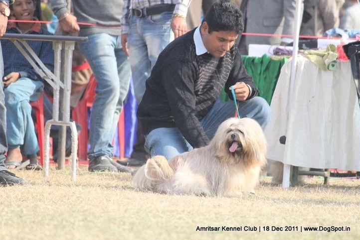 lhasa,sw-46,, Amritsar 2011, DogSpot.in