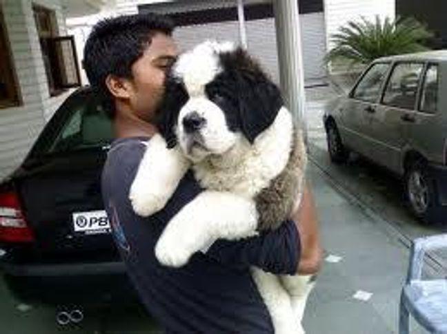 , amritsar dog bazar, DogSpot.in