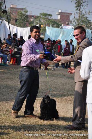 cocker,, Amritsar Dog Show 2010, DogSpot.in