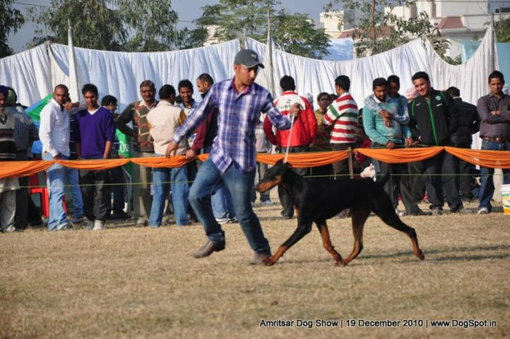 doberman,, Amritsar Dog Show 2010, DogSpot.in