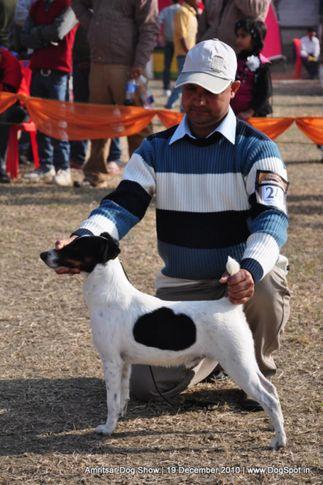 ex-241,fox terrier,, Amritsar Dog Show 2010, DogSpot.in