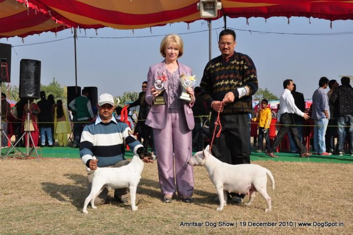 ex-241,fox terrier,, Amritsar Dog Show 2010, DogSpot.in