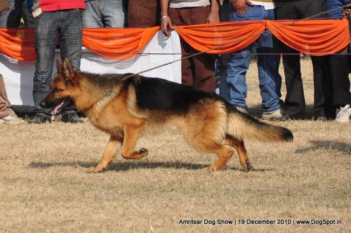 ex-234,gsd,, Amritsar Dog Show 2010, DogSpot.in