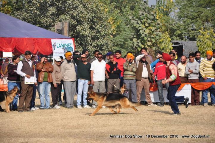 ex-235,gsd,, Amritsar Dog Show 2010, DogSpot.in