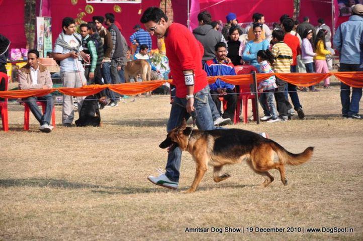 ex-288,gsd,, Amritsar Dog Show 2010, DogSpot.in