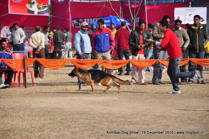 ex-231,ex-288,gsd,, Amritsar Dog Show 2010, DogSpot.in
