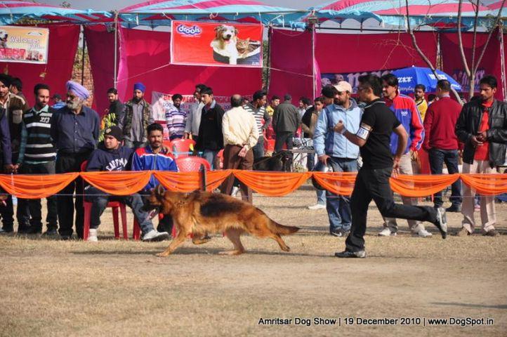 ex-231,gsd,, Amritsar Dog Show 2010, DogSpot.in