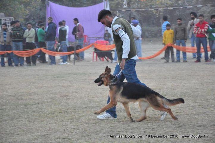 gsd,, Amritsar Dog Show 2010, DogSpot.in