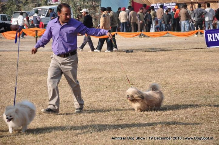 lhasa,, Amritsar Dog Show 2010, DogSpot.in