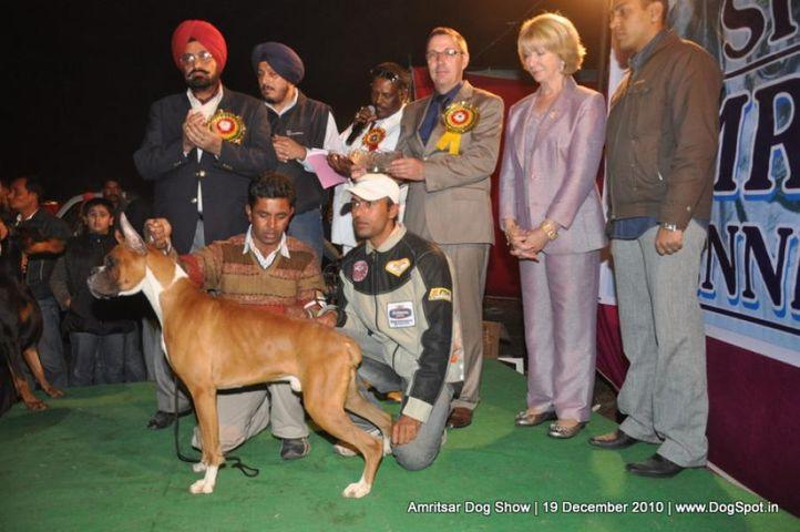 lineup,, Amritsar Dog Show 2010, DogSpot.in