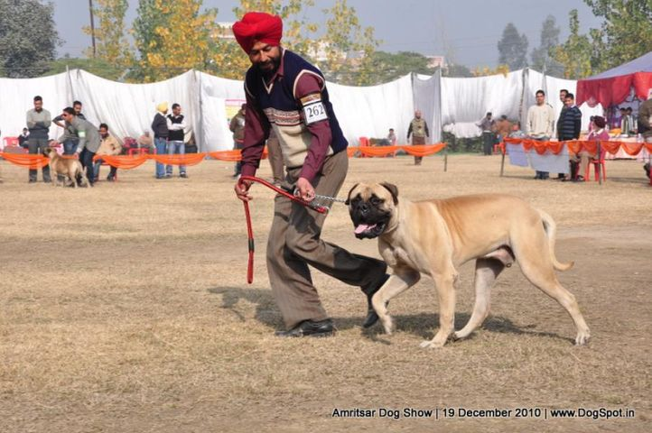 mastiff,, Amritsar Dog Show 2010, DogSpot.in