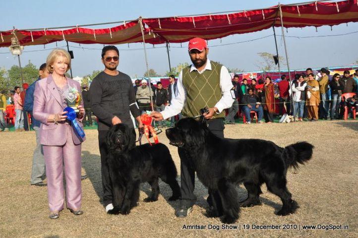 ex-174,newfoundland,, Amritsar Dog Show 2010, DogSpot.in