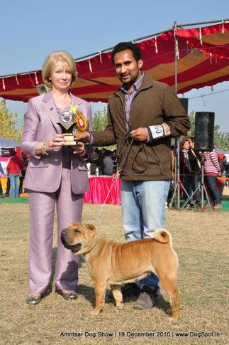 shar-pie,, Amritsar Dog Show 2010, DogSpot.in