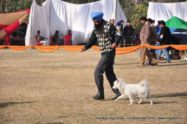 spitz,, Amritsar Dog Show 2010, DogSpot.in
