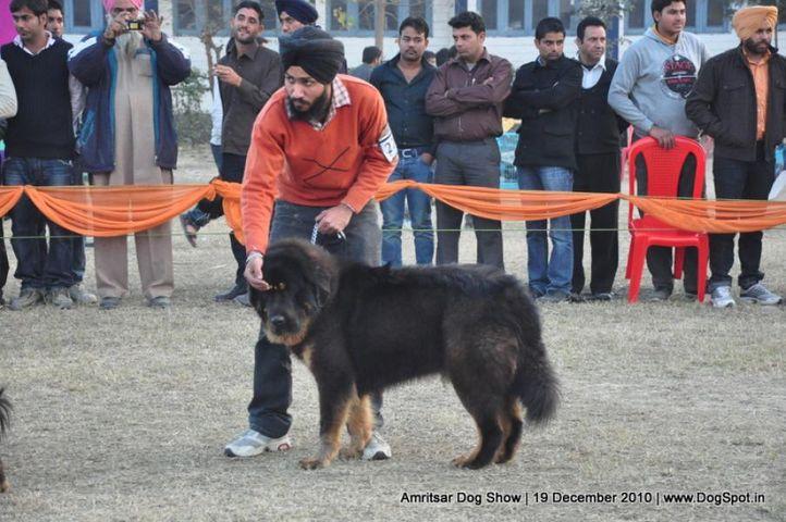 tibetan mastiff,, Amritsar Dog Show 2010, DogSpot.in