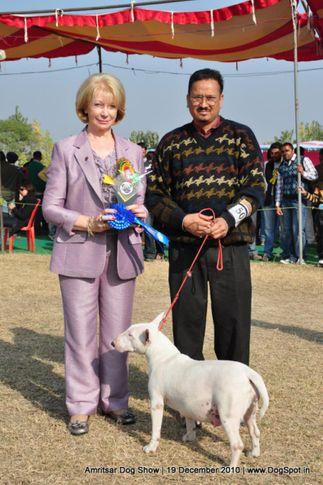 bull terrier,, Amritsar Dog Show 2010, DogSpot.in