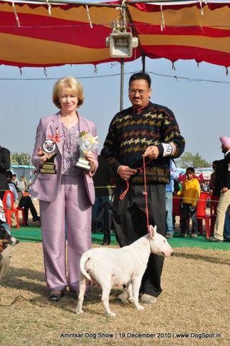 bull terrier,ex-50,, Amritsar Dog Show 2010, DogSpot.in
