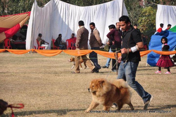 chow chow,, Amritsar Dog Show 2010, DogSpot.in