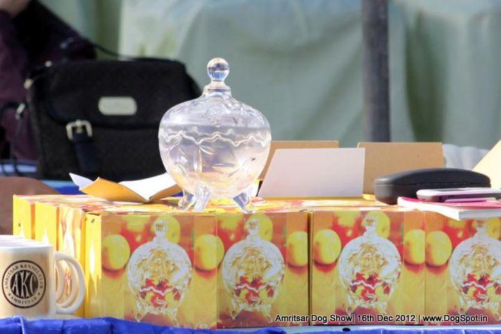 show throphy,sw-65,, Amritsar Dog Show 2012, DogSpot.in