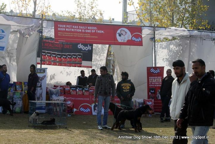 ground stall,pug,sw-65,, Amritsar Dog Show 2012, DogSpot.in
