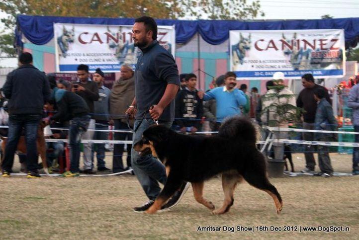 sw-65,, Amritsar Dog Show 2012, DogSpot.in