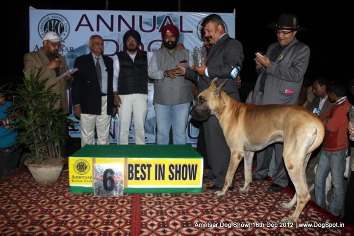 great dane,line up,sw-65,, Amritsar Dog Show 2012, DogSpot.in