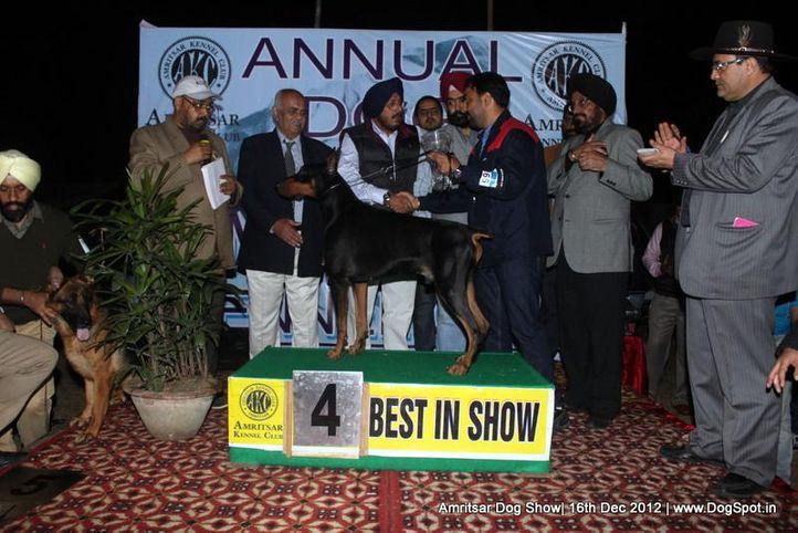 dobemann,line up,sw-65,, Amritsar Dog Show 2012, DogSpot.in