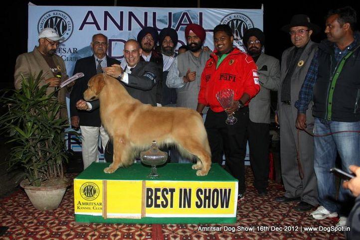 golden retriever,line up,sw-65,, Amritsar Dog Show 2012, DogSpot.in