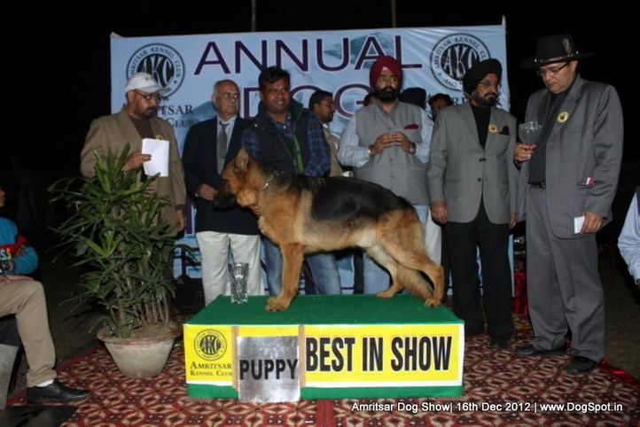 german shepherd,line up,sw-65,, Amritsar Dog Show 2012, DogSpot.in