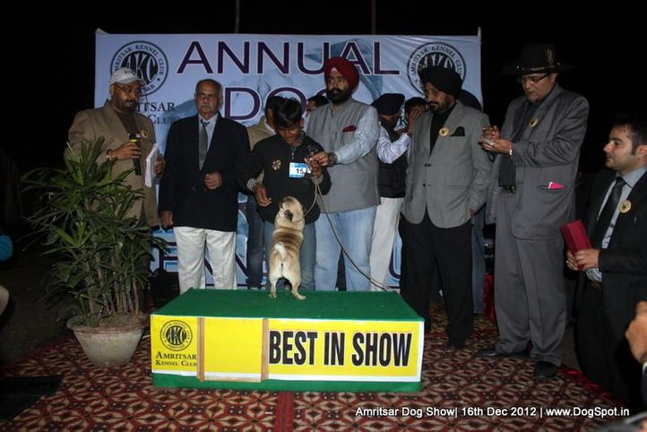 line up,pug,sw-65,, Amritsar Dog Show 2012, DogSpot.in