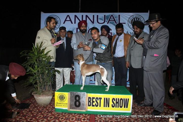 line up,sw-65,whippet,, Amritsar Dog Show 2012, DogSpot.in