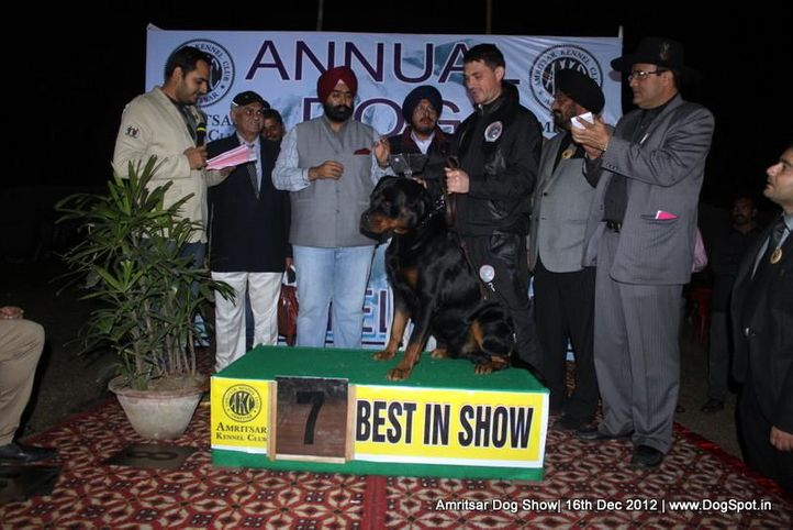 line up,rottweiler,sw-65,, Amritsar Dog Show 2012, DogSpot.in