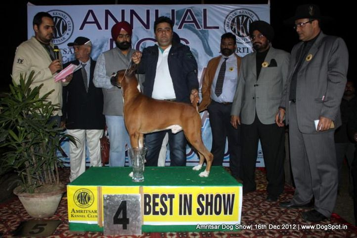 boxer,line up,sw-65,, Amritsar Dog Show 2012, DogSpot.in