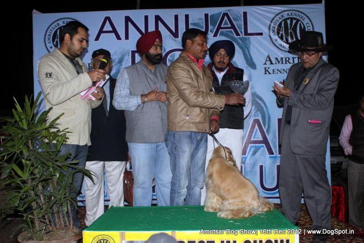 cocker spaniel,line up,sw-65,, Amritsar Dog Show 2012, DogSpot.in