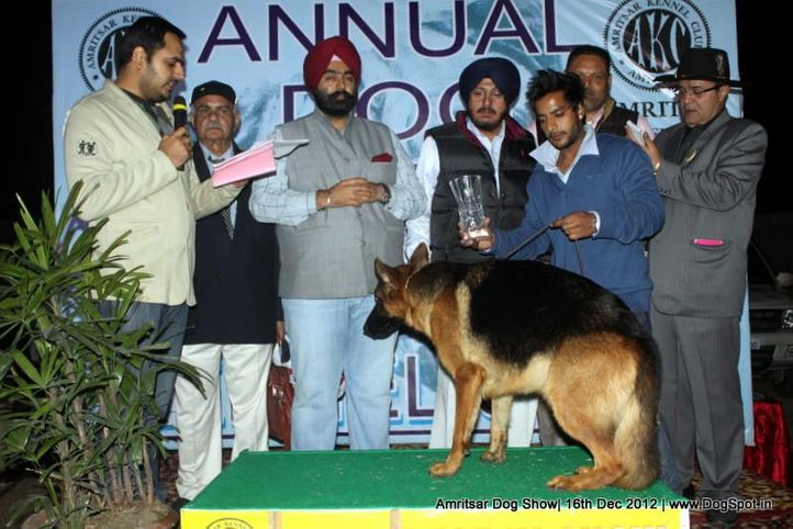 german shepherd,line up,sw-65,, Amritsar Dog Show 2012, DogSpot.in
