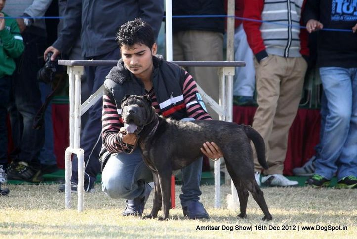 ex-69,sharpei,sw-65,, GREWAL'S BLACK STICK, Shar Pie, DogSpot.in