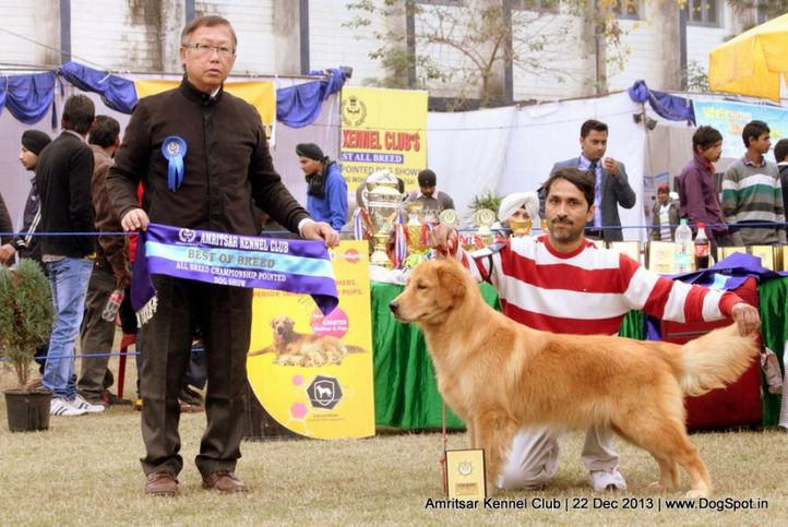 golden retriever,sw-100,, Amritsar Dog Show 2013, DogSpot.in