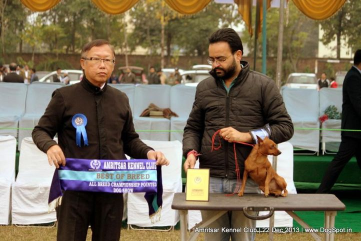 min-pin,miniature pinscher,sw-100,, Amritsar Dog Show 2013, DogSpot.in