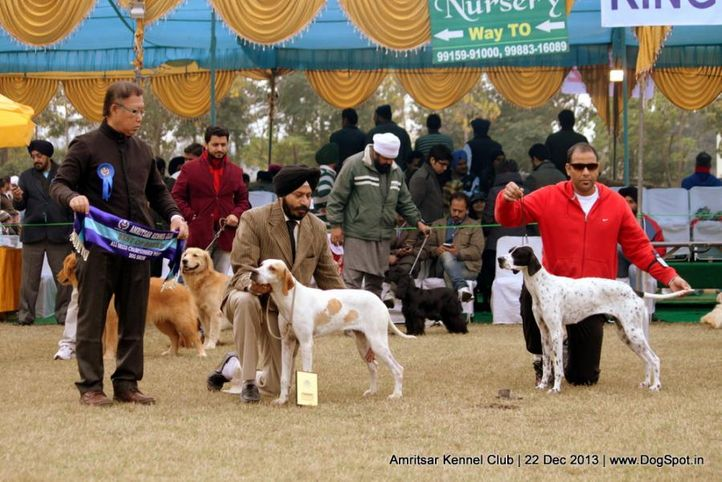 pointer,sw-100,, Amritsar Dog Show 2013, DogSpot.in