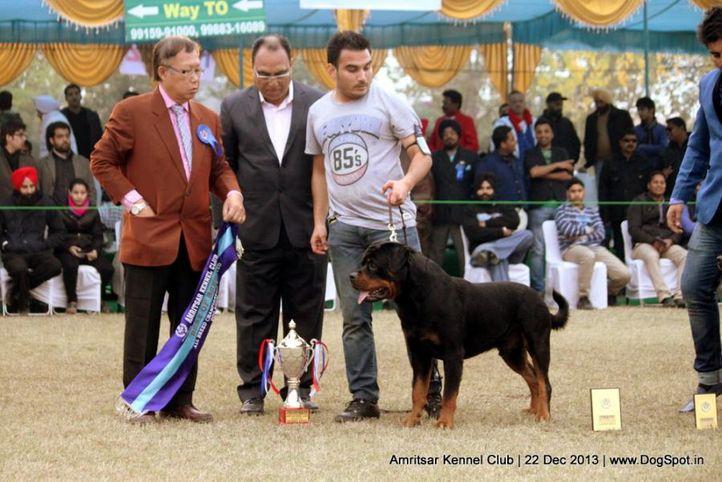 rottweiler,sw-100,, Amritsar Dog Show 2013, DogSpot.in