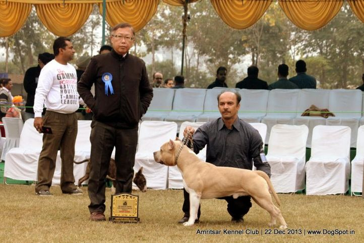 sw-100,terriers,, Amritsar Dog Show 2013, DogSpot.in